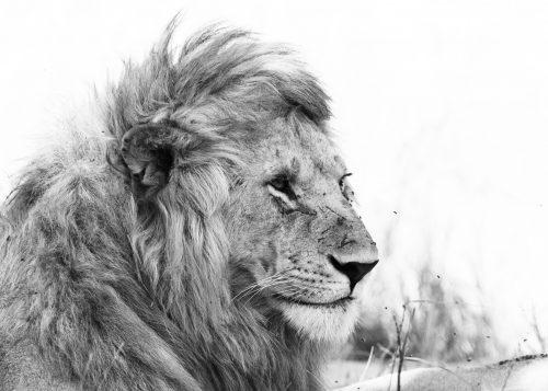 Black Rock Pride male in black and white