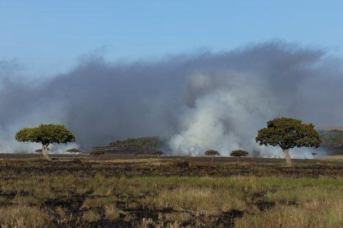 The hazy skyline from the seasonal burning is a mark of the migration season