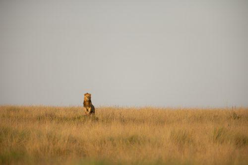 Koshoke, from the Bila Shaka Coalition, peers over the long grass