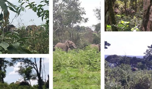 Rangers note elephants they see on patrol and record the data in the MEP's EarthRanger system