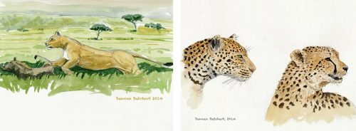 Painting was one of the many ways that he documented what he saw and learnt on safari