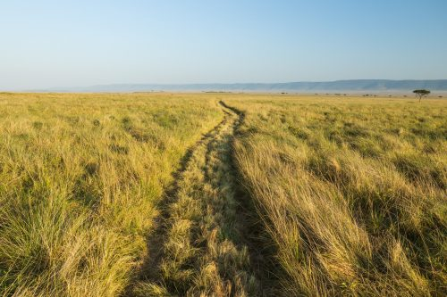 The roads are in great shape thanks to the effort of the Mara Conservancy
