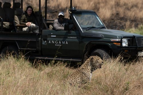 The Shepherd Tree Male pays the safari vehicle no mind as he goes about his day