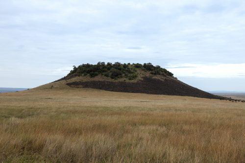 Myles Turner Hill taken in July 2021