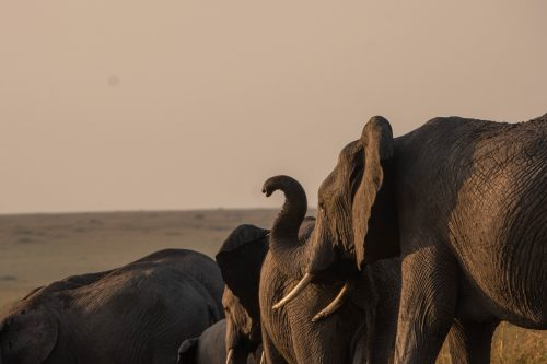 The elephants have a nose for change and they're not ones to hang around for the crowds