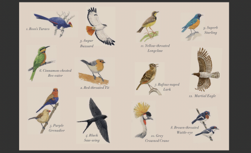 The Delightful Dozen as seen in our beloved 'Early-Birds' booklet