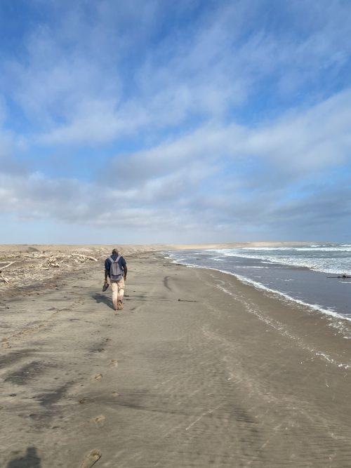 An ocean walk along the barren coast lined with driftwood