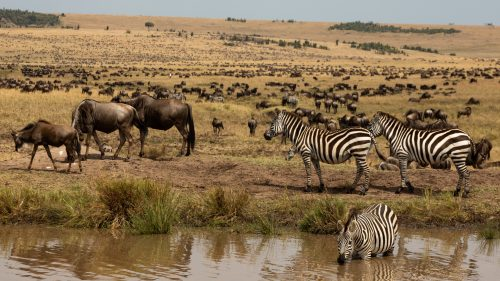After all the chaos we don't blame this zebra for taking a dip in this peaceful little pool