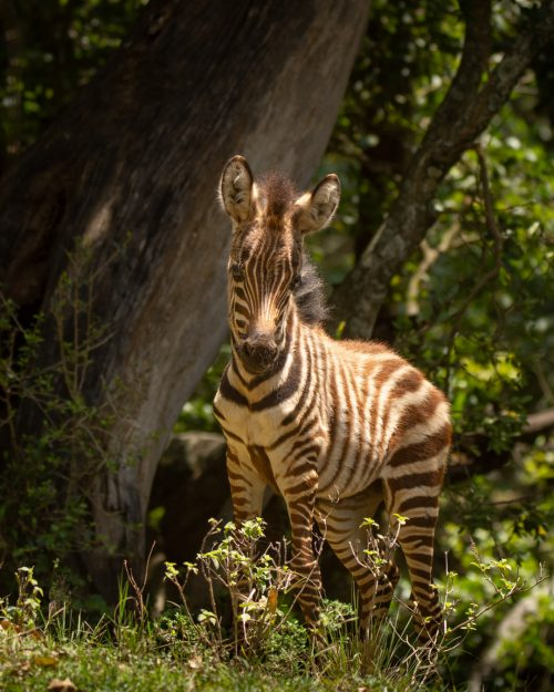 This adorable zebra foal was very inquisitive about us