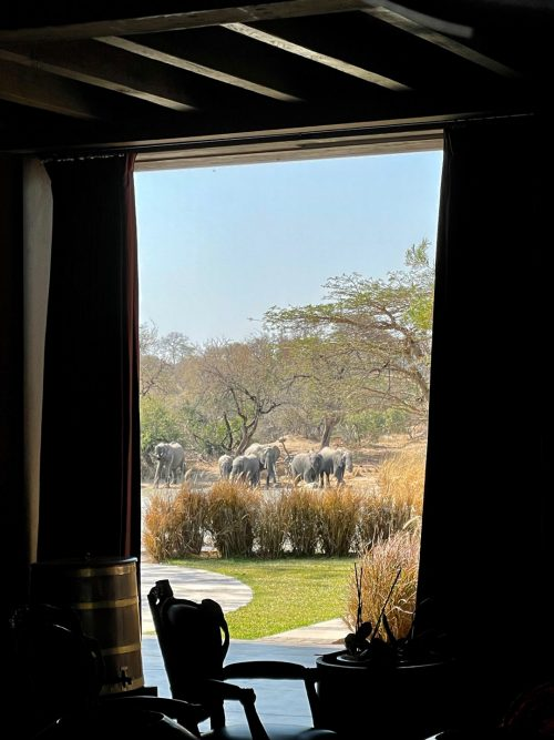 Situated on the largest dam in the reserve, Kubili House is the ultimate sofa-safari