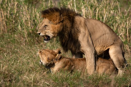 Mama Kali is one of the most experienced mothers in the Mara
