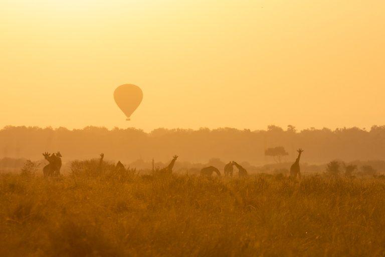 Hot air balloon in the Maasai Mara at sunrise