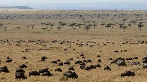 Still having them dotted across the Mara is a relief