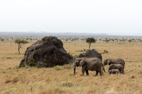 Playing with shapes, the boulders managed to dwarf these elephants