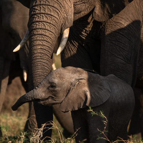Elephant calves are always a delight, especially in this herd