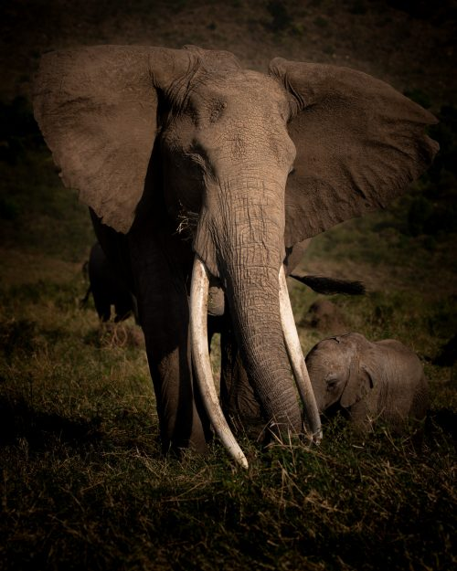 Millie, our patron matriarch of the Mara