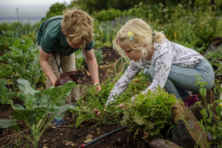Children picking vegetables in the Angama Mara vegetable garden