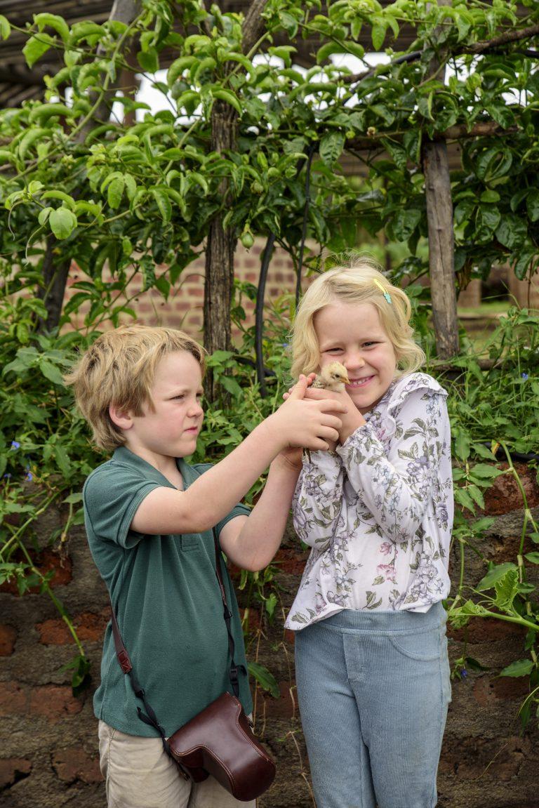 Angama Mara shamba vegetable garden with baby chics