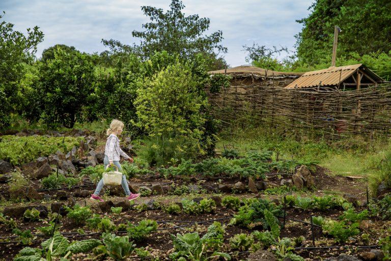 Family activities include shamba vegetable garden Maasai Mara