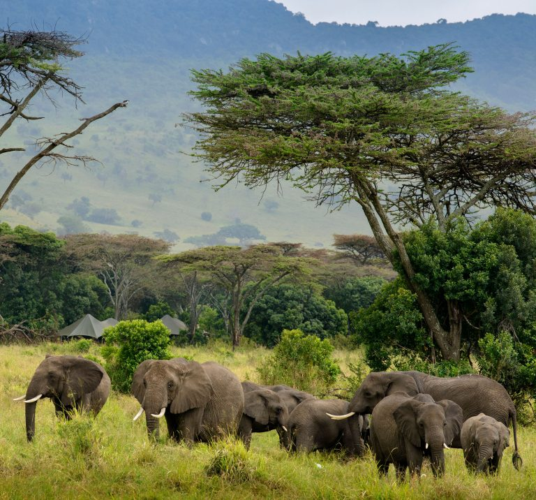 Elephants in front of Angama Safari Camp