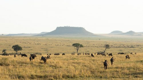 A new perspective: looking north towards the Inselbergs from Tanzania